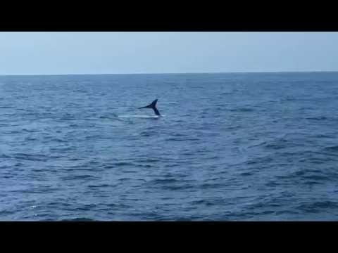 Humpback whale watching from Bar Harbor