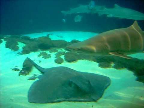 Ny brooklyn aquarium coupons