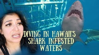 Insane!! Shark Cage Diving In Hawaii's | 2019