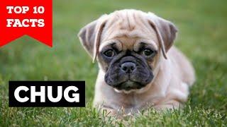 Chug  Top 10 Facts