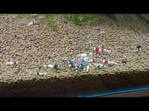 [aquarium tommy]토미의 새우수조 소개