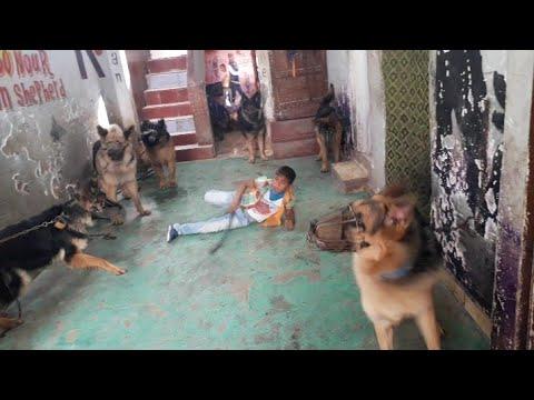 عايز تدرب كلبك يبقا اشرس كلب مع الطفل ياسين اصغر  مدرب في العالم الكله