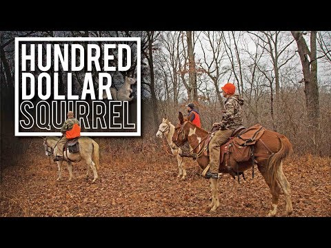 Hundred Dollar Squirrel | Squirrel Hunt on MULES in the Ozarks using FEISTS