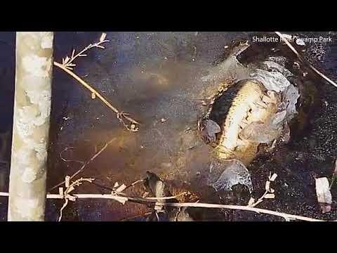 How alligators survive North Carolinas arctic blast  Daily Mail Online