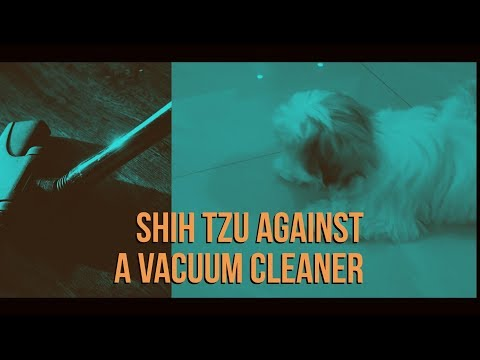 Shih Tzu against a vacuum cleaner