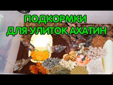 Подкормки для улиток ахатин (кальций, растительный и животный белок)