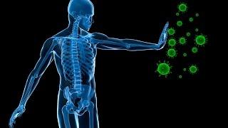 Human immune system