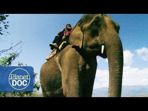The Unicorn of India. Elephant Tour | Nature