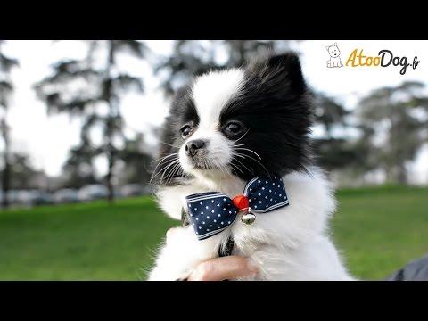 double coupon qualité-supérieure recherche d'officiel Noeuds papillons pour chien