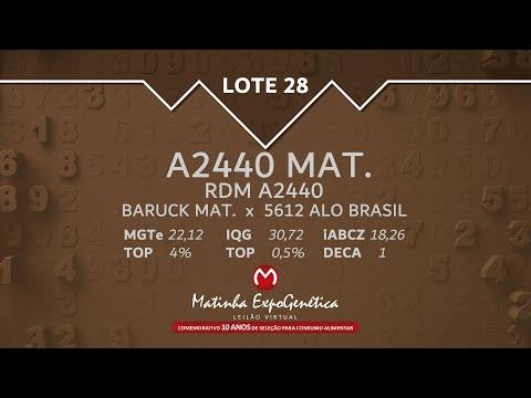 LOTE 28 MATINHA EXPOGENÉTICA 2021