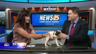 Need a Laugh? Enjoy Watching this Cute Puppy on WXXV
