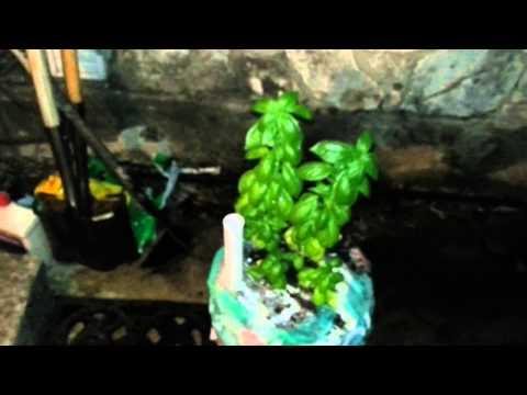 ( Doomsday Preppers ) PREPPER MOBILE FOOD GARDEN - Self Watering Container Bucket