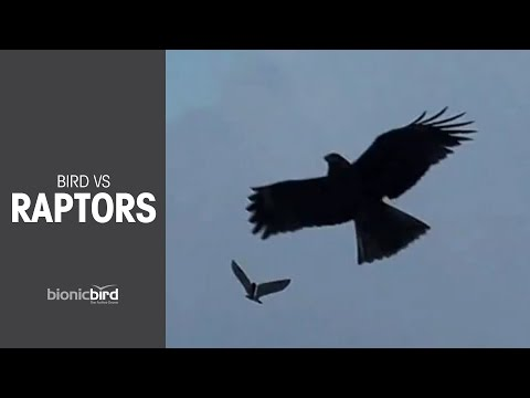 This Bionic Bird Dupes Its Real-Life Counterparts