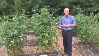 From the Ground Up - Heirloom Tomatoes