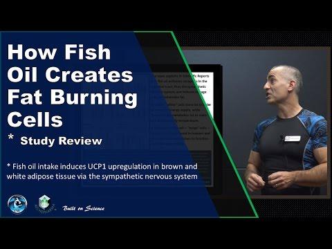 How Fish Oil Creates Fat Burning Cells