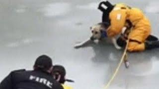 カナダ・サスカチュワン州で3日、散歩中に引き綱を外してもらった犬が、...