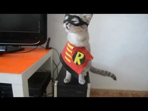 Parodia Batman vs Superman Parody