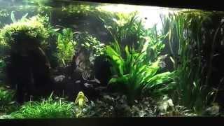 4000L Aquarium mit Salmlern und Skalaren!!