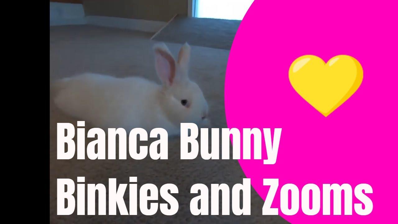 Bianca Bunny is wild!