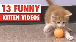 13 Funny Kittens Video Compilation 2016