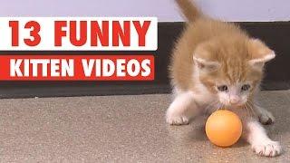 meowing kittens