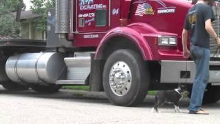 Puppy Afraid Of Big Truck   Follow The Leader Dog Training And Rehabilitation Llc