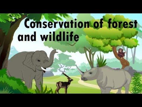 Mumbai, maharashtra, india saevus is a premium magazine & Conservation Of Forest And Wildlife Youtube