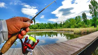 Bluegill Bed Fishing! How To Find Bluegill Beds
