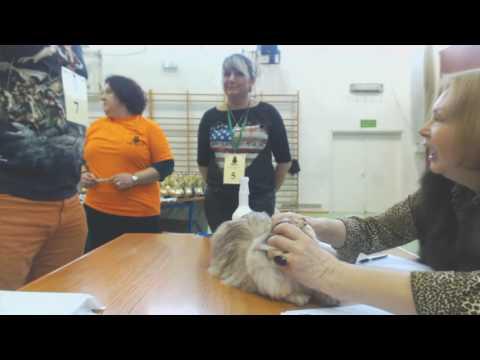 2017.01.14 International Cat Show WCF, Piaseczno (part 1/3)