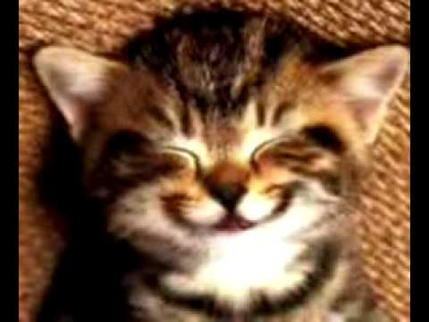 Katze Singt Happy Birthday Youtube