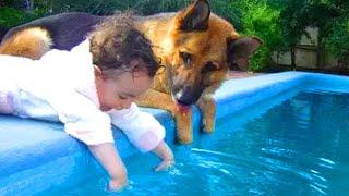 「赤ちゃんと犬」何をされても怒らないジャーマン・シェパード犬・優しすぎる! ????????