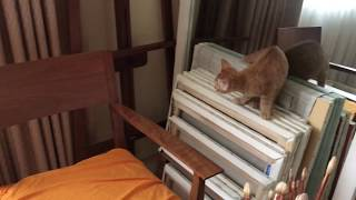 生後2ヶ月の子猫が我が家にやってきました。 家族と離れ、知らないとこ...