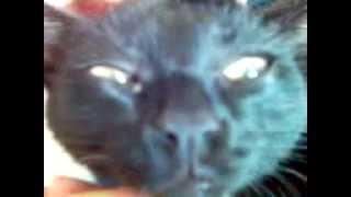 Кот по имени Бля