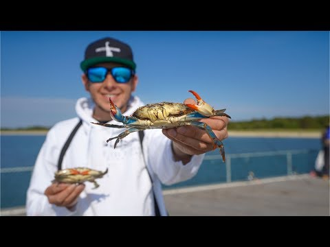 Blue Crab (Catch Clean Cook) DELICIOUS Crab Bisque and Whole Crabs