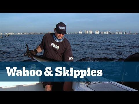 Wahoo Skipjack Tuna & Deep Drop - Florida Sport Fishing TV