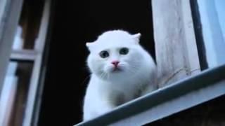 вот что значит когда коты говорят отвянь