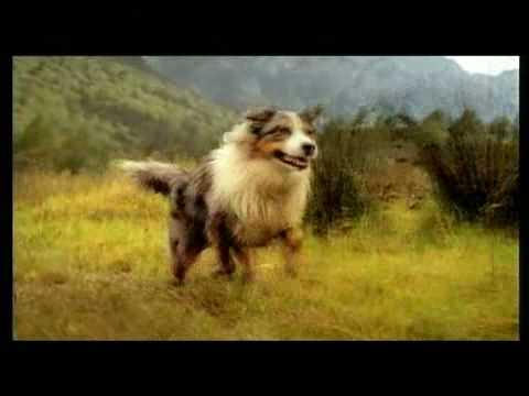 FedEx 聯邦速遞的牧羊犬廣告