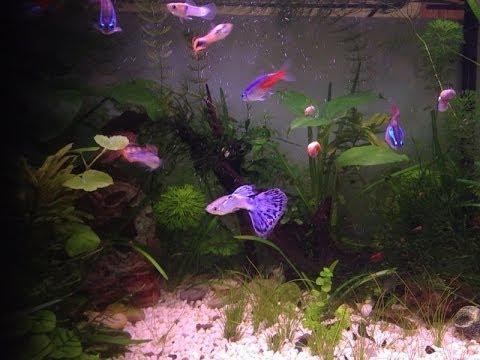 Guppy e compagni d 39 acquario italian youtube for Acquario tartarughe e pesci insieme