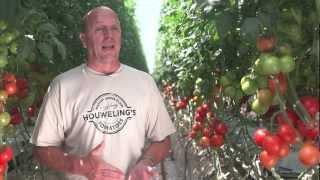 Future360.tv: Houwelings Tomatoes