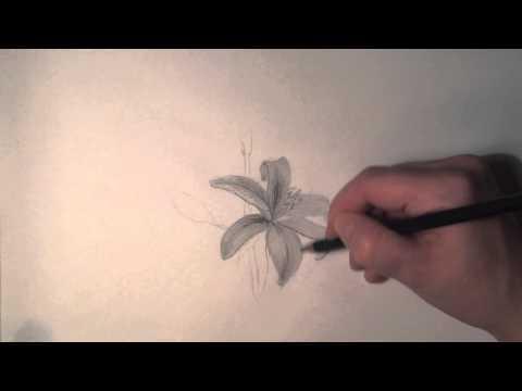 Blume zeichnen (Lilie) / как нарисовать цветок карандашом