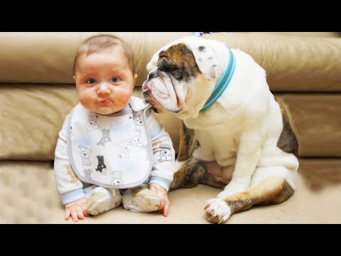 Dogs Playing and Arguing With Baby ★ Dog Loves Baby Videos