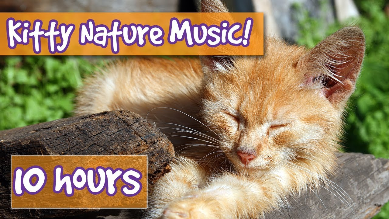 Relaxing Cat And Kitten Music With Nature Sounds Music To Calm Cats With Nature And Animal Sounds Youtube