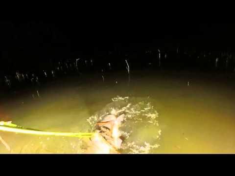 bowfishing in stevenson Alabama