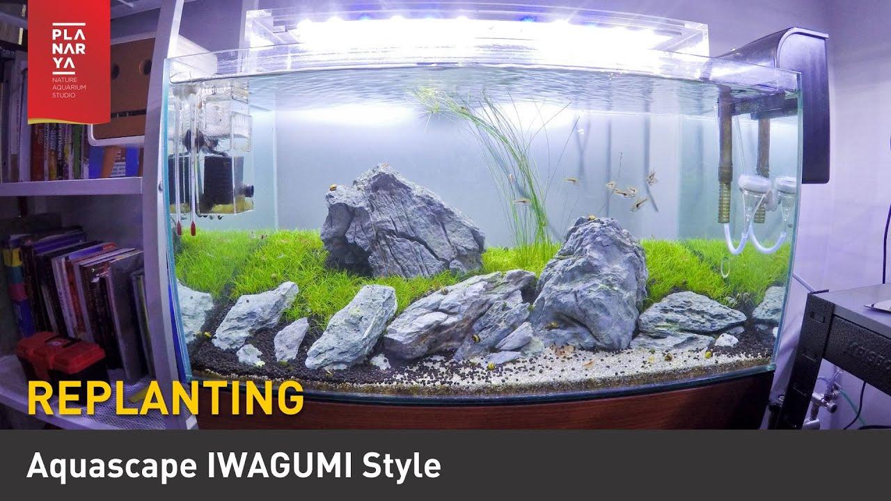Aquascape Iwagumi Style Replanting Youtube