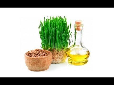Масло зародышей пшеницы Свойства и применение