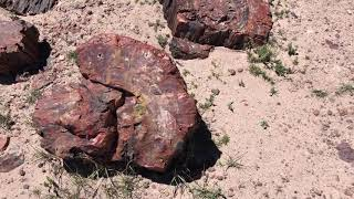 Camping and Hiking at the Petrified Forest and Painted Desert