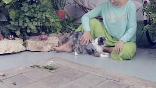 Собака и ребенок в доме: что нужно знать | Часть 3 | Чихуахуа Софи