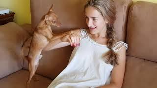 ДАЙ КУСОЧЕК//собака весело/СМЕЯТЬСЯ приколы с животными