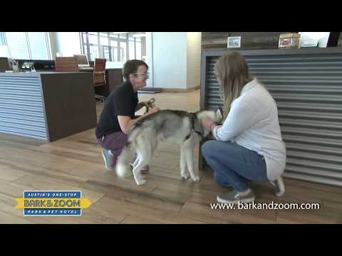 Austin Dog Grooming And Training Classes At Bark&Zoom