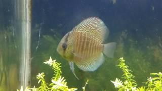 Fish room update #21  fish moving around
